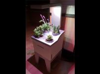 식물 생장 전용 LED 빛으로 다육이와 허브 예쁘게 키우기
