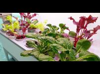 집에서 식물 키우기 어렵다고 생각하시나요? 파쯔파쯔가 도와드려요!