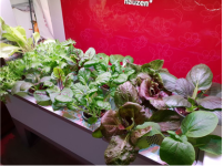 수확의 기쁨, 향이 진하고 아삭한 식감의 채소를 느껴보세요!