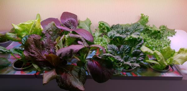 잘 키운 우리집 식물재배기 텃밭, 열 농장 안부럽다!