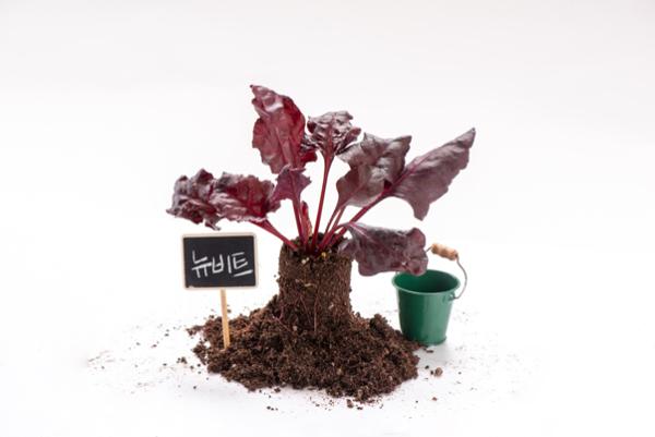 우리 텃밭 파쯔파쯔 채소 키우기 3편 : 비타민과 뉴비트