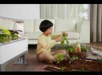 [#10 파쯔파쯔이야기] 양파모종심기. 한달이 지난 지금 얼마나 자랐을까?
