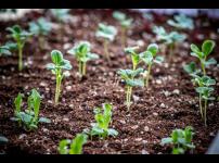우리 텃밭 파쯔파쯔 식물재배기로 채소를 잘 키우기 위한 필수 조건!