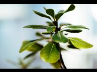 파쯔파쯔에 무엇을 키울까 4편 : 관엽 및 공기 정화 식물