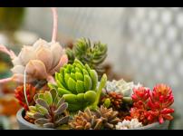 우리텃밭 파쯔파쯔에서 무엇을 키울까 3편: 다육식물
