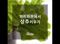 [파쯔파쯔에서 상추키우기] 2편 : 어린이가 된 상추새싹들