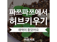 [허브키우기(2)] 바질 씨앗, 싹이 트다! / 가정용식물재배기 / 우리텃밭 파쯔파쯔