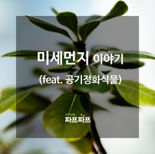 [미세먼지 이야기] 식물은 어떻게 공기정화를 할까?(feat. 공기정화식물)