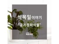 [식목일이야기] 실내에서 키우기 좋은 공기정화식물 추천