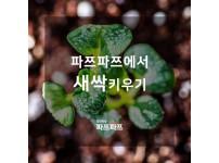 [파쯔파쯔에서 새싹키우기] 식물의 정체는 떡잎부터 알아본다?!
