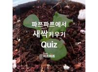 [가정용 식물재배기 우리텃밭 파쯔파쯔에서 새싹키우기] 새싹 Quiz! 새싹만 보고 식물이름 맞추기