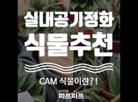 [CAM식물이야기] 우리집 천연공기청정기, CAM식물들! / 가정용식물재배기 / 우리텃밭 파쯔파쯔