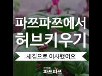 [허브키우기(3)] 우리 허브들, 새 집으로 이사했어요!/ 가정용식물재배기 / 우리텃밭 파쯔파쯔