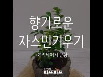 사무실에서 자스민 키우기 도전! + 체리세이지 근황 / 우리텃밭 파쯔파쯔 / 가정용식물재배기
