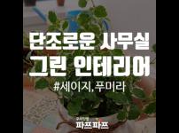 [사무실 플랜테리어] 단조로운 사무실에 초록색을 더해보자! - 세이지&푸미라 / 가정용식물재배기 / 우리텃밭…
