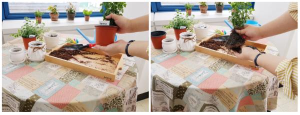 [사무실 플랜테리어] 단조로운 사무실에 초록색을 더해보자! - 세이지&푸미라 / 가정용식물재배기 / 우리텃밭 파쯔파쯔