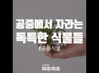 흙이 없어도 살 수 있는 식물, 공중식물(에어플랜트) / 가정용식물재배기 / 우리텃밭파쯔파쯔