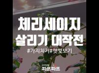 시들시들한 체리세이지 살리기 대작전! / 우리텃밭 파쯔파쯔 / 가정용식물재배기