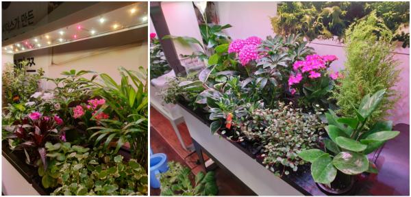2019 코리아빌드 전시회 참가 후기 / 우리텃밭 파쯔파쯔 / 가정용식물재배기