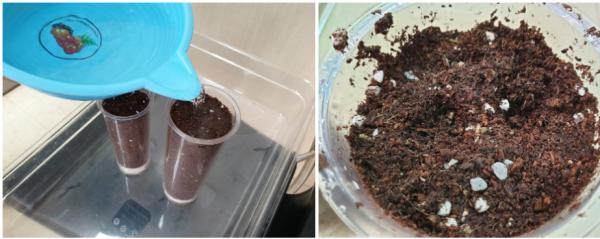 봉선화 키우기 도전(1) / 우리텃밭 파쯔파쯔 / 가정용 식물재배기