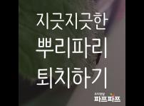 해충과의 전쟁(1) : 뿌리파리 / 우리텃밭 파쯔파쯔 / 가정용식물재배기