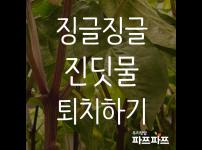 해충과의 전쟁(2) : 진딧물 / 우리텃밭 파쯔파쯔 / 가정용 식물재배기
