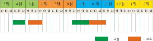 20일무(래디쉬) 키우기 성공! / 우리텃밭 파쯔파쯔 / 가정용식물재배기