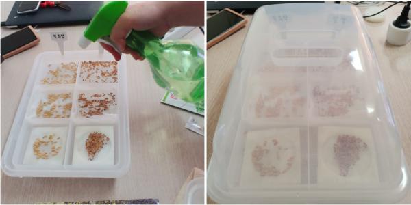 싹 틔우기에 대한 고찰 / 우리텃밭 파쯔파쯔 / 가정용식물재배기