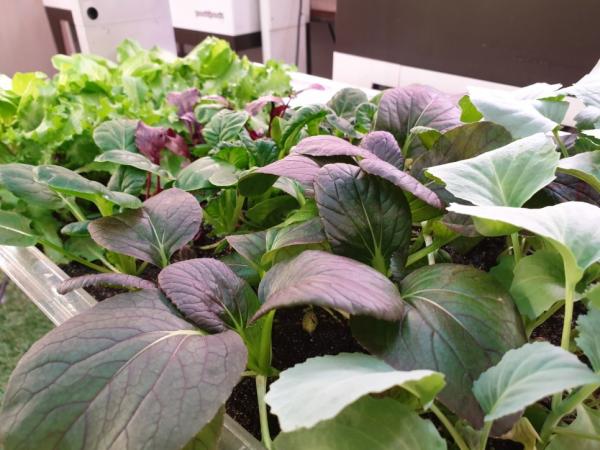 파쯔파쯔 씨앗모둠을 소개합니다 / 우리텃밭 파쯔파쯔 / 가정용 식물재배기