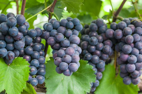 과일, 채소별 잔류농약 씻는 법/ 우리텃밭 파쯔파쯔 / 가정용 식물재배기