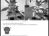 봉선화 키우기(2) : 주인 잘못 만나 고생중 / 우리텃밭 파쯔파쯔 / 가정용 식물재배기