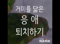 해충과의 전쟁(4) : 아 '응애'에요 / 우리텃밭 파쯔파쯔 / 가정용 식물재배기