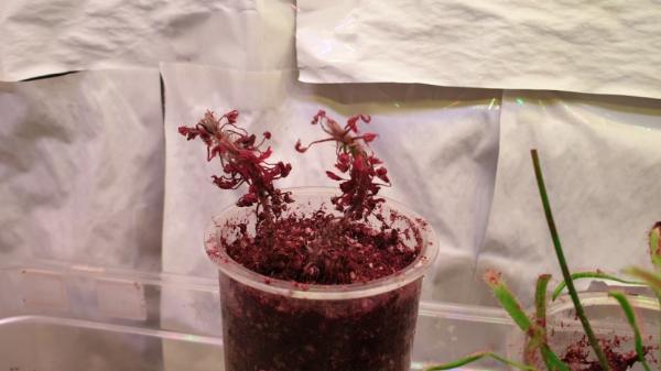 프로듀스보다 치열한 재배실험실을 소개합니다! / 우리텃밭 파쯔파쯔 / 가정용 식물재배기
