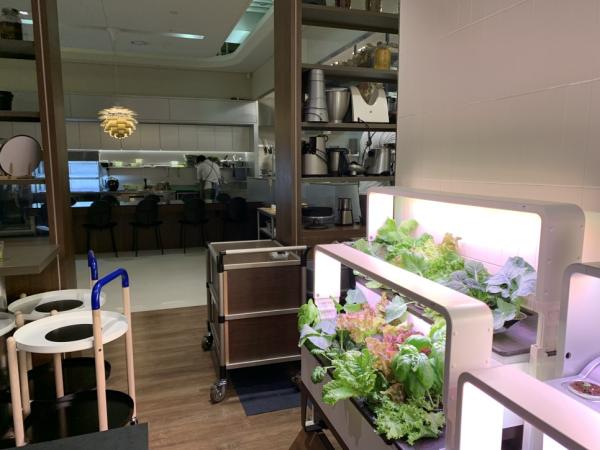 앨리웨이 광교 씽크주에서 파쯔파쯔 전시중! / 우리텃밭 파쯔파쯔 / 가정용 식물재배기