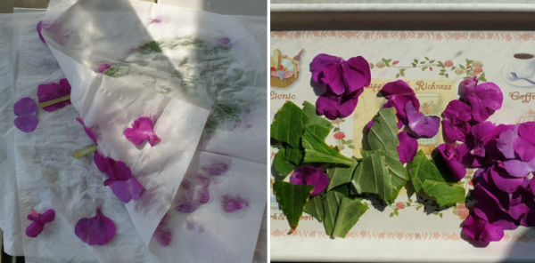 사무실에서 봉선화 물들이기 해봤어요! / 우리텃밭 파쯔파쯔 / 가정용 식물재배기