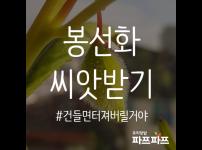 봉선화 씨앗 받기 / 우리텃밭 파쯔파쯔 / 가정용 식물재배기