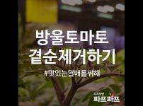방울토마토 곁순(곁가지) 제거하기 / 우리텃밭 파쯔파쯔 / 가정용 식물재배기