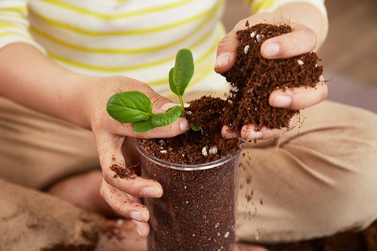 Plant Pots Basic